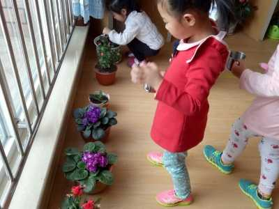 幼儿园宝宝给花浇热水 呼斯楞幼儿园萌芽十三班《我给小花浇浇水》