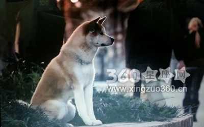 梦见狗讲话 梦见会说话的狗有什么寓意