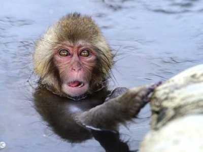 1968年属猴人 68年属猴人的未来10年