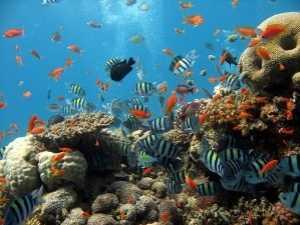 世界上最毒的海洋生物 我很美可是我很危险要——有毒的海洋生物