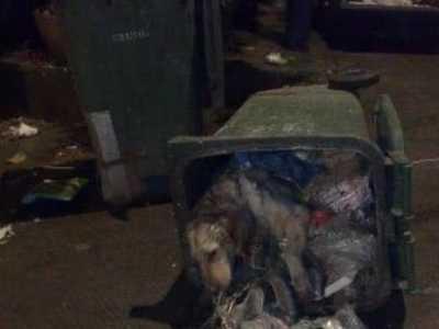 可怜又可恨 同事匆忙路过垃圾站竟听到里面有声音