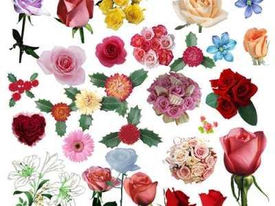 自然界什么花颜色最多 花儿为什么有各种颜色