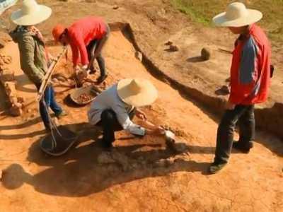 7.2考古虫子 考古发现365万年前神秘脚印