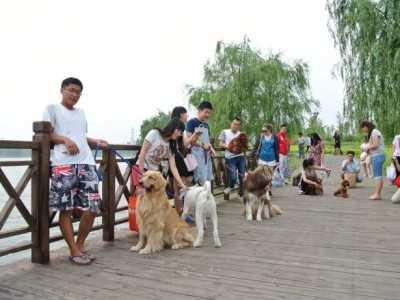 济南遛狗的好去处 推荐济南即能带家人又能带狗去的地方
