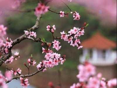 12生肖什么学识好 十二生肖的桃花运怎么推算