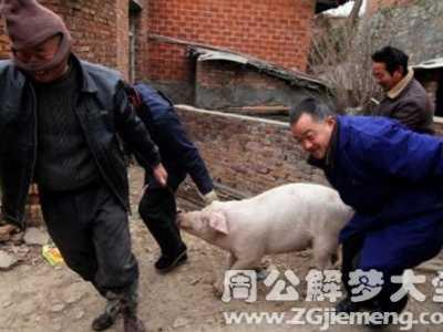 周公解梦梦见杀猪 梦见杀猪什么意思
