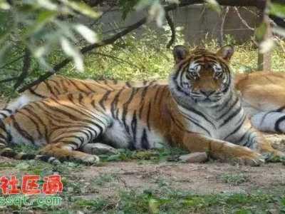 雅戈尔动物园事件索赔 浙江宁波雅戈尔动物园猴子被投食辣条
