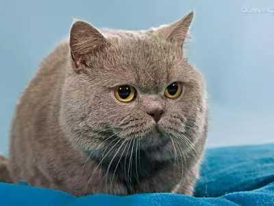没有毛的猫是什么品种 最受欢迎的几种宠物猫的品种介绍