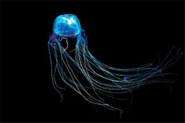 澳洲方水母无疑上榜 剧毒动物排行榜