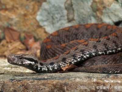 世界最毒的毒蛇第一名 十大最毒的蛇排名