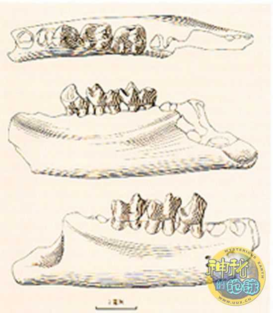 中华曙猿化石的发现 中华曙猿化石地点