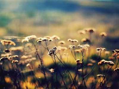 青春与梦想的唯美句子 青春与梦想的优美语录