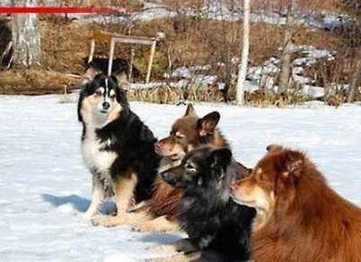 来自北欧五个国家的代表犬种 荷马时代的别称